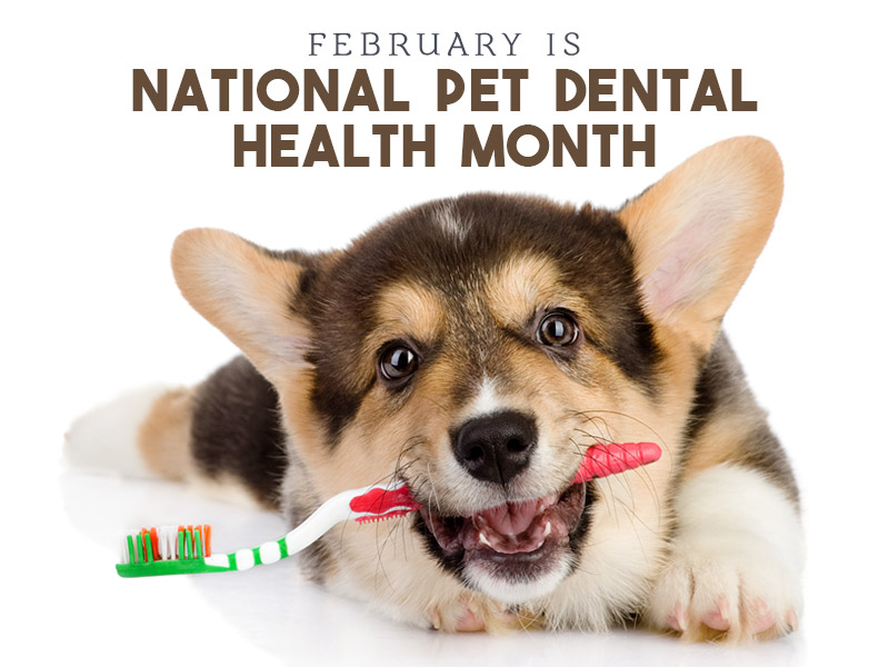February Dental Month